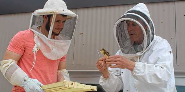Hive Beekeepers